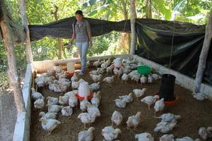 Paula, Chicken Farm Entrepreneur